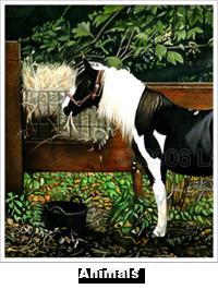 Portfolio Animals